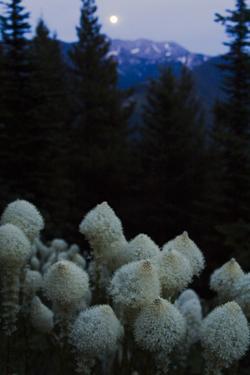 Beargrass under a Full Moon. Swan Range, Montana by Steven Gnam