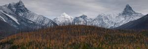Golden Larch Below Peaks in Glacier-Waterton International Peace Park, Lewis Range, Montana by Steven Gnam