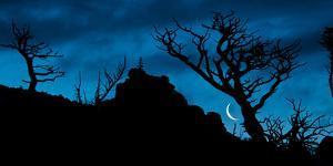 Moon Rises as Dawn Light Illuminates the Skeletons of Whitebark Pine, Lewis Range, Montana by Steven Gnam