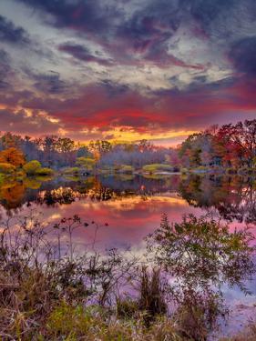 FirePond by Steven Maxx