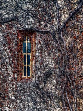 Oxford Vines by Steven Maxx