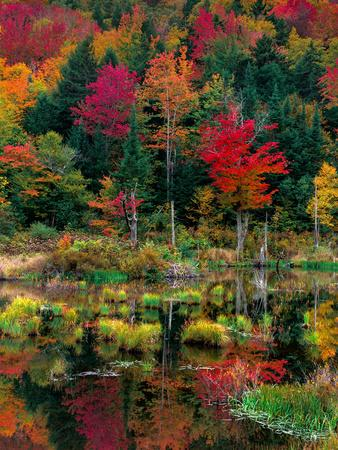 Vermont Fall #2