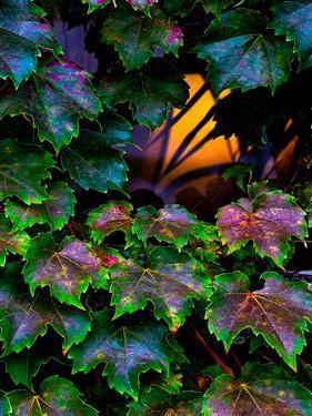 Vermont Lit Window & Ivy by Steven Maxx