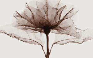 A Rose by Steven N. Meyers