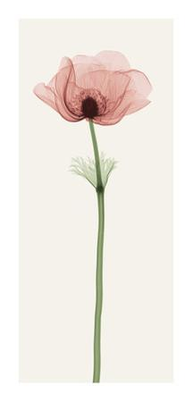 Anemone IV by Steven N. Meyers