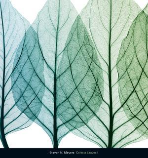 Celosia Leaves I by Steven N. Meyers