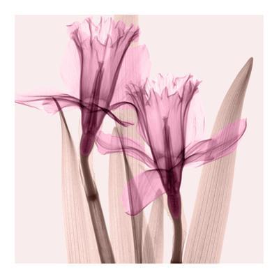 Daffodils III by Steven N. Meyers