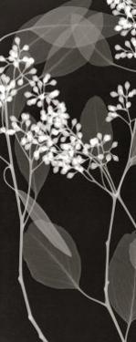 Eucalyptus IV by Steven N. Meyers