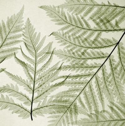 Ferns I by Steven N. Meyers