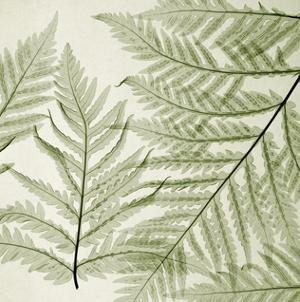 Ferns I by Steven N. Meyers