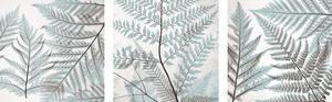 Ferns Mix I by Steven N. Meyers
