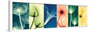 Flora by Steven N. Meyers