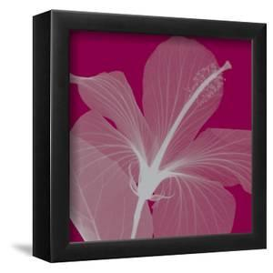 Hibiscus/Silver (small) by Steven N^ Meyers