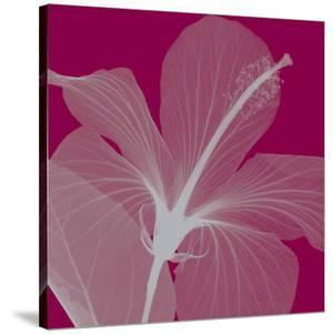 Hibiscus/Silver by Steven N. Meyers