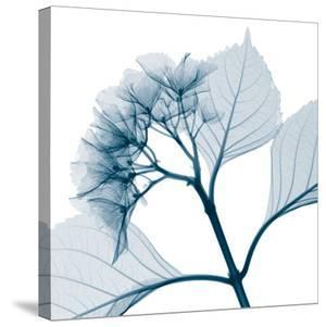 Hydrangeas - Positive (Right) by Steven N. Meyers