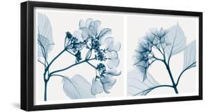 Hydrangeas [Positive] by Steven N. Meyers