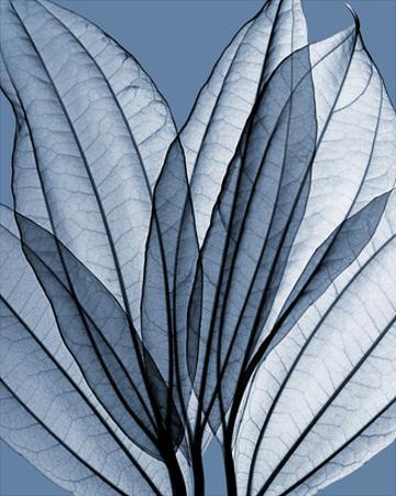 Leaf Bouquet, Cornflower by Steven N. Meyers