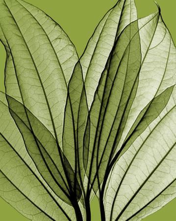 Leaf Bouquet, Green by Steven N. Meyers