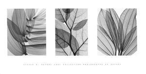 Leaf Collection by Steven N. Meyers