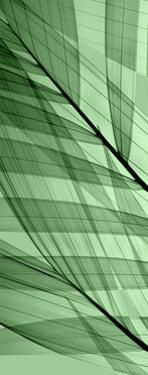 Palms A, Green Flash by Steven N. Meyers