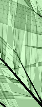 Palms B, Green Flash by Steven N. Meyers