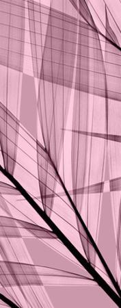 Palms B, Rose Quartz by Steven N. Meyers