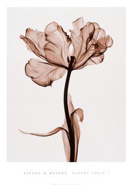Parrot Tulip I by Steven N. Meyers