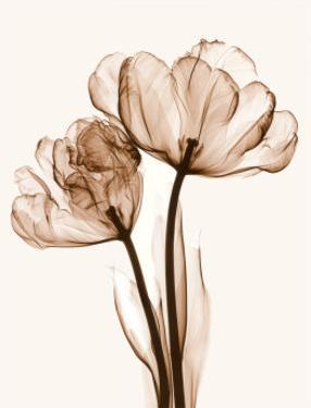 Parrot Tulips II by Steven N. Meyers