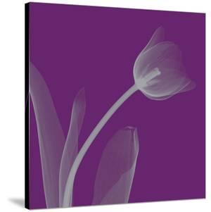 Tulip/Silver (small) by Steven N. Meyers