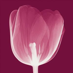 Tulips B (Negative) by Steven N. Meyers