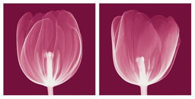 Tulips [Negative] by Steven N. Meyers
