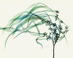 Wind by Steven N. Meyers