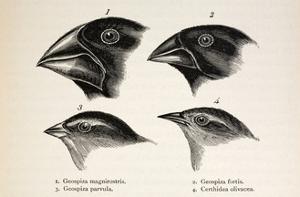 Darwin's Galapagos Finches by Stewart Stewart