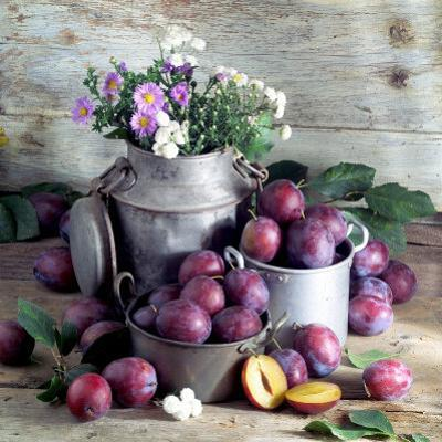 Still Life with Fresh Plums in and in Front of Pots & Pans