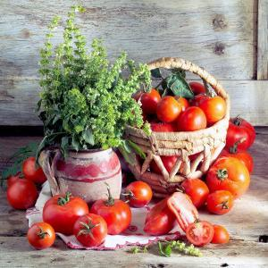 Still Life with Tomatoes and Flowering Basil in a Vase