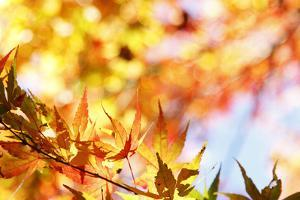Leaves Changing Color in Autumn Forest by STILLFX
