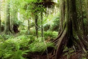 New Zealand Tropical Forest Jungle by STILLFX