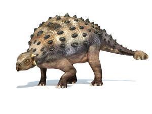 3D Rendering of An Ankylosaurus Dinosaur by Stocktrek Images