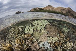A Beautiful Reef Grows in Komodo National Park, Indonesia by Stocktrek Images
