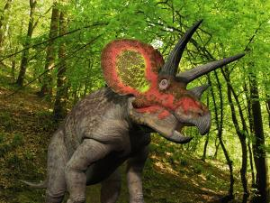 A Colorful Triceratops Wanders a Cretaceous Forest by Stocktrek Images