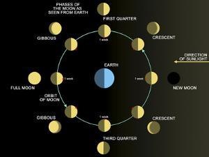 A Diagram Showing the Phases of the Earth's Moon by Stocktrek Images