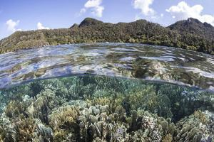 A Diverse Array of Corals Grow in Raja Ampat, Indonesia by Stocktrek Images