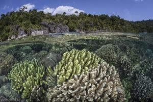 A Diverse Array of Reef-Building Corals in Raja Ampat, Indonesia by Stocktrek Images