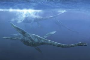 A Group of Plesiosaurus Maneuver Quickly Underwater by Stocktrek Images