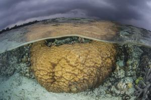 A Large Boulder Coral Colony Grows in Shallow Water in the Solomon Islands by Stocktrek Images