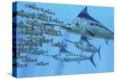A School of Amemasu Fish Try to Evade Three Large Marlin Predators by Stocktrek Images