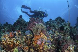 A Scuba Diver Swims Above a Colorful Coral Reef Near Sulawesi, Indonesia by Stocktrek Images