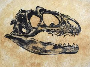 Allosaurus Dinosaur Skull by Stocktrek Images