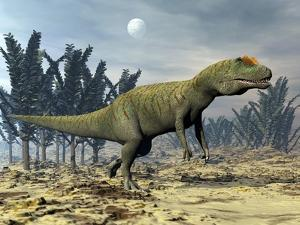 Allosaurus Dinosaur Walking Amongst Pachypteris Trees by Stocktrek Images
