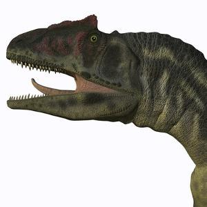 Allosaurus Dinosaur by Stocktrek Images